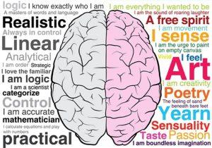 Hoe-werkt-verbeelding-in-het-brein